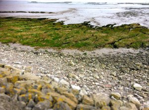 Goldcliff Sea Wall IMG_1613