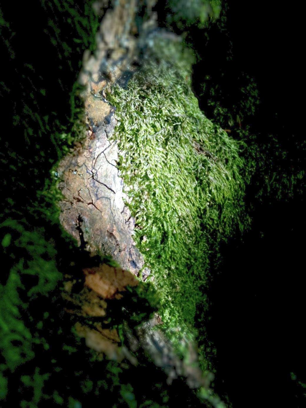 tree trunk detail 2