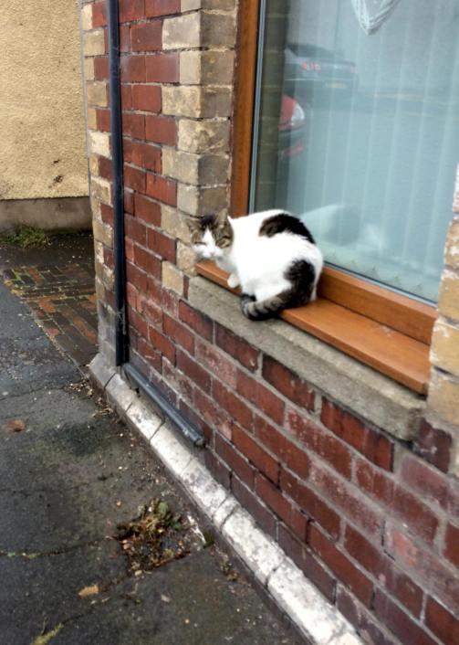 cat sat on window sill