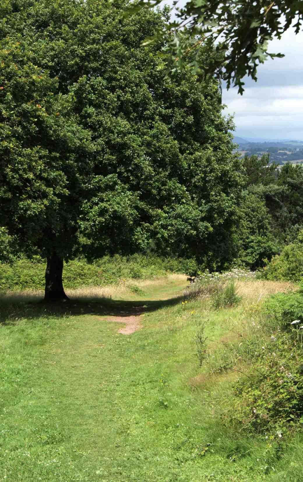 slope down into St Julian's Park meadow