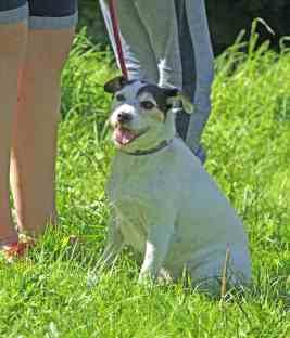 Woodland Park Dog Show 2017 IMG_9831