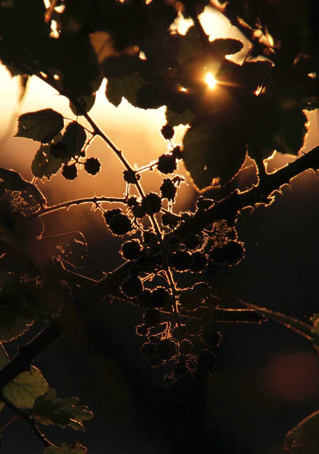 sunlight backlit