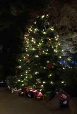 Caves - Christmas tree 1