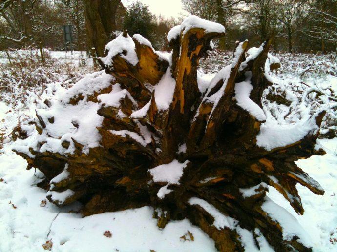 Snow treeroots