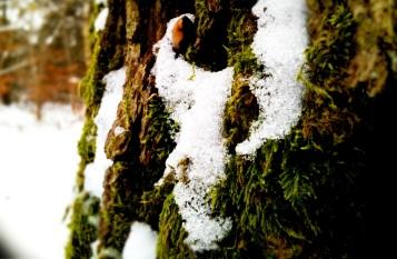 Snow treetrunk