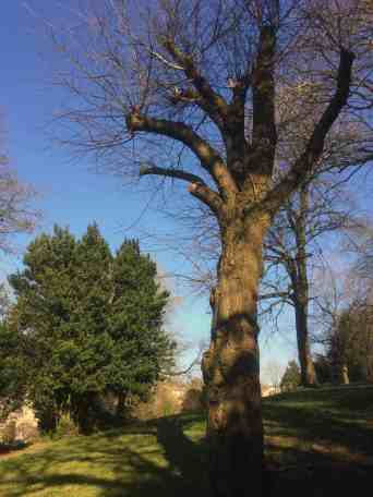 Woodland Park 05