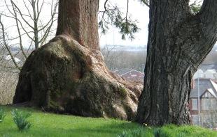 BVP_TreeStump