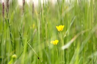 Meadow detail 1