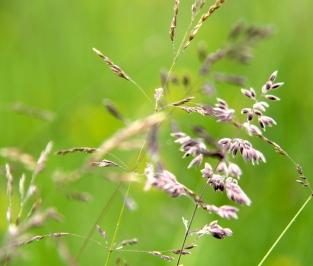 Meadow detail 2