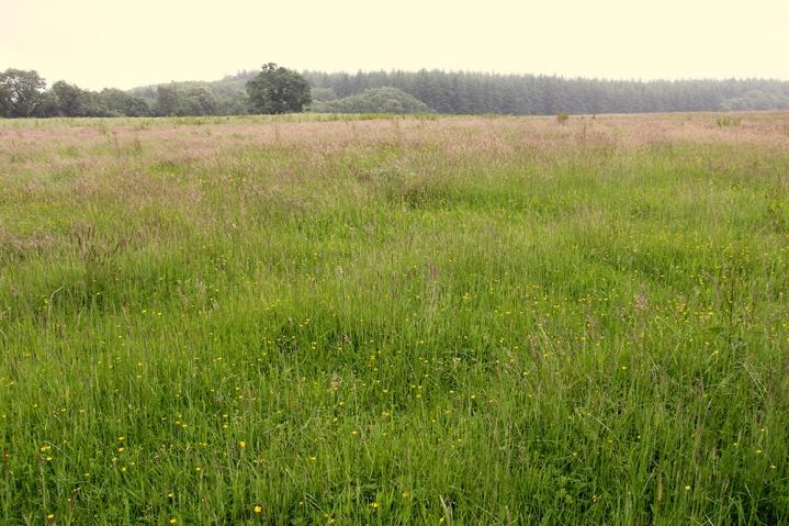 Meadow wide