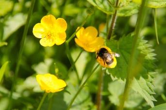 Woods - Bee