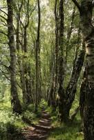 Woods - path 1