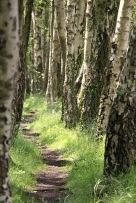 Woods - path 3