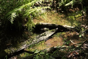Woods - stream
