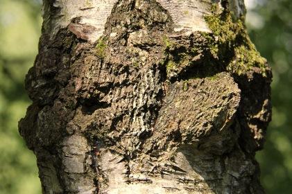 Woods - trunk 3