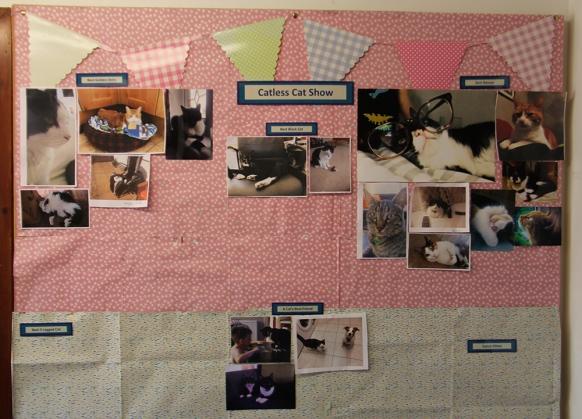Catless Cat Show