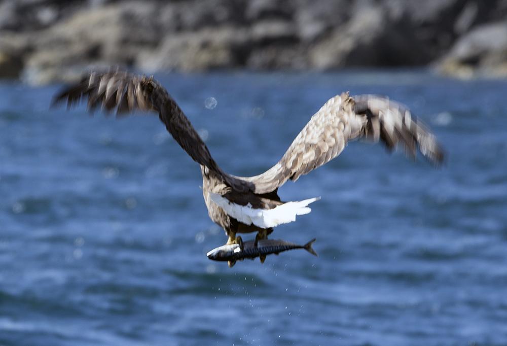 sea eagle 4