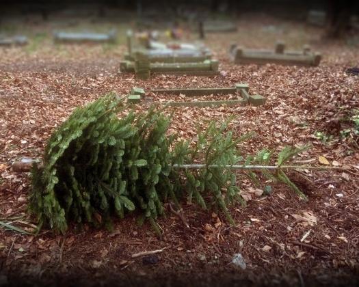 St Cadoc's Church - abandoned Christmas tree