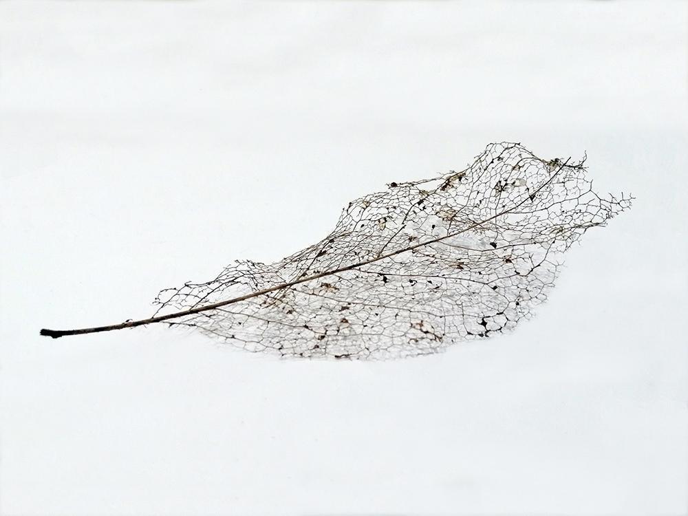 leaf 2 1000px width